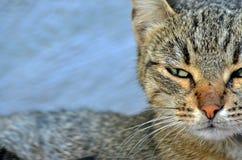 Μια γάτα οδών Στοκ Εικόνα