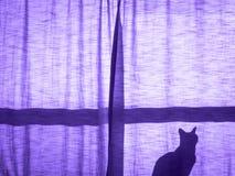 Μια γάτα πίσω από το ηλιοβασίλεμα κουρτινών Στοκ Φωτογραφίες
