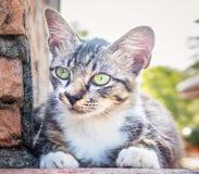 Μια γάτα περιμένει το θήραμα στοκ εικόνα