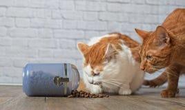 Μια γάτα πιπεροριζών και τιγρέ stealing τρόφιμα γατών από ένα εμπορευματοκιβώτιο τροφίμων Στοκ Εικόνες