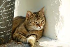 Μια γάτα που έχει τη σιέστα σε μια σκιά Στοκ Εικόνες