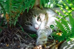 Μια γάτα που βρίσκεται στα πράσινα φύλλα μιας φτέρης στοκ φωτογραφία