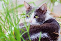 Μια γάτα που βρίσκεται στην πράσινη χλόη Στοκ Εικόνες