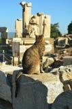 Μια γάτα που εξετάζει τις καταστροφές Ephesus στοκ εικόνες