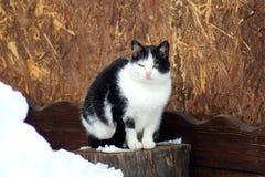 Μια γάτα σε έναν περίπατο οδών στοκ εικόνες
