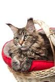 , μια γάτα σε ένα καλάθι Στοκ Εικόνα