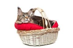 Μια γάτα σε ένα καλάθι Στοκ Εικόνες