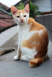 Μια γάτα στην κορυφή στεγών Στοκ Εικόνα