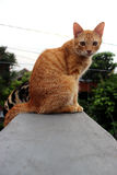 Μια γάτα στην κορυφή στεγών Στοκ εικόνα με δικαίωμα ελεύθερης χρήσης
