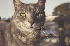 Μια γάτα στη καφετερία Στοκ εικόνες με δικαίωμα ελεύθερης χρήσης