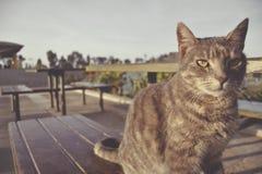 Μια γάτα στη καφετερία Στοκ Φωτογραφίες