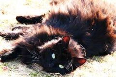 Μια γάτα στη χλόη Στοκ φωτογραφία με δικαίωμα ελεύθερης χρήσης