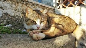 Μια γάτα στον ήλιο 2 υπνηλίας Στοκ Φωτογραφίες