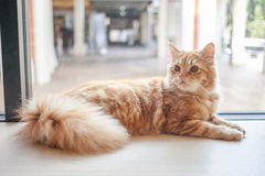 Μια γάτα στον πίνακα Στοκ Εικόνες