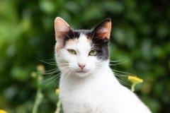 Μια γάτα συνεδρίασης στοκ εικόνα με δικαίωμα ελεύθερης χρήσης