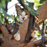 Μια γάτα τιγρών στοκ εικόνες