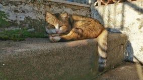 Μια γάτα υπνηλίας στον ήλιο Στοκ Εικόνα