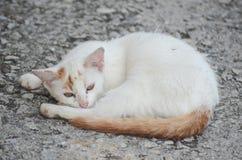 Μια γάτα ύπνος στο πάτωμα Στοκ Φωτογραφίες