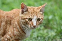 Μια γάτα Στοκ φωτογραφία με δικαίωμα ελεύθερης χρήσης