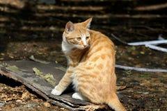 Μια γάτα Στοκ εικόνες με δικαίωμα ελεύθερης χρήσης