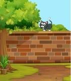 Μια γάτα Στοκ Εικόνα