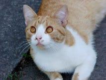 Μια γάτα Στοκ φωτογραφίες με δικαίωμα ελεύθερης χρήσης