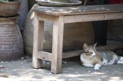 Μια γάτα Στοκ Φωτογραφία