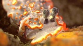 Μια γαρίδα τρώει τα τρόφιμα φιλμ μικρού μήκους