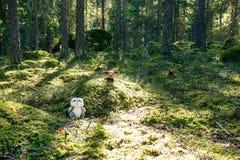 Μια γεμισμένη κουκουβάγια, άλκες, αντέχει και ρακούν σε ένα πράσινο άνετο δάσος στοκ εικόνα