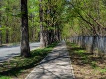 Μια για τους πεζούς διάβαση πεζών στο πάρκο Στοκ Εικόνα