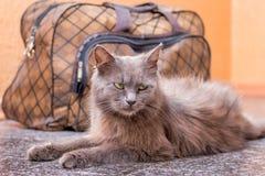 Μια γκρίζα γάτα κάθεται κοντά στη βαλίτσα Αναμονή το τραίνο στο σταθμό τρένου Επιβάτης με μια βαλίτσα ενώ traveling_ στοκ φωτογραφίες