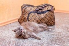 Μια γκρίζα γάτα κάθεται κοντά στη βαλίτσα Αναμονή το τραίνο στο σταθμό τρένου Επιβάτης με μια βαλίτσα ενώ traveling_ στοκ φωτογραφία με δικαίωμα ελεύθερης χρήσης