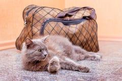 Μια γκρίζα γάτα κάθεται κοντά στη βαλίτσα Αναμονή το τραίνο στο σταθμό τρένου Επιβάτης με μια βαλίτσα ενώ traveling_ στοκ εικόνα