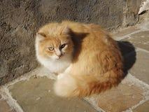 Γάτα χώρας στοκ φωτογραφία με δικαίωμα ελεύθερης χρήσης