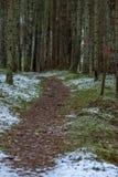 Μια γούρνα ιχνών ένα σουηδικό δάσος το Δεκέμβριο στοκ εικόνα