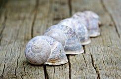 Μια γραμμή κοχυλιών σαλιγκαριών Στοκ Εικόνα