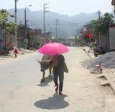 Μια γυναίκα, ένα Buffalo, και μια φωτεινή ρόδινη ομπρέλα στο βόρειο Βιετνάμ Στοκ φωτογραφία με δικαίωμα ελεύθερης χρήσης