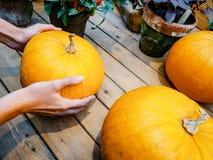 Μια γυναίκα επιλέγει μια κολοκύθα στην αγορά Πορτοκαλιά κολοκύθα στα χέρια Στοκ Εικόνες