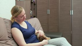 Μια γυναίκα κάθεται σε έναν καναπέ και κτυπά ένα κατευναστικό τεριέ του Γιορκσάιρ Σκυλί που γλείφει τα χέρια απόθεμα βίντεο
