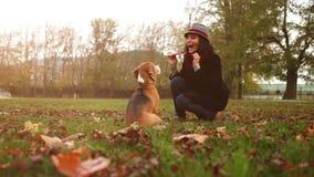 Μια γυναίκα μιλά το σκυλί της στη λήψη ενός πεσμένου φύλλου στα δόντια της ενώ στον περίπατο φιλμ μικρού μήκους