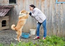 Μια γυναίκα παίζει με ένα σκυλί στο υπόβαθρο ενός ξύλινου υπόστεγου Στοκ Εικόνα