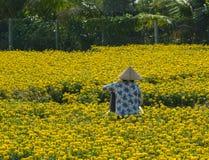 Μια γυναίκα που εργάζεται στον τομέα λουλουδιών στο νότιο Βιετνάμ Στοκ Εικόνα