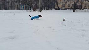 Μια γυναίκα που τρέχει μακριά με το σκυλί του στο χιονισμένο πάρκο φιλμ μικρού μήκους