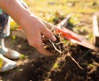 Μια γυναίκα σκάβει έναν κήπο με ένα φτυάρι Στοκ Εικόνες