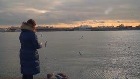 Μια γυναίκα στέκεται στην ακτή και τους ταΐζοντας γλάρους Χρόνος βραδιού απόθεμα βίντεο
