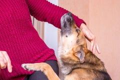Μια γυναίκα χαϊδεύει ένα σκυλί Φροντίδα για το animals_ στοκ εικόνα