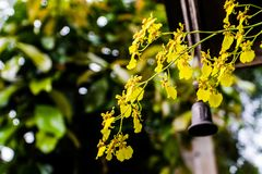 Μια δέσμη των κίτρινων λουλουδιών φαίνεται συμπαθητική ως υπόβαθρο Στοκ Φωτογραφίες