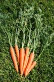 Μια δέσμη των πράσινων φύλλων καρότων στην πράσινη χλόη την ηλιόλουστη ημέρα κλείστε επάνω Τοπ όψη στοκ φωτογραφία
