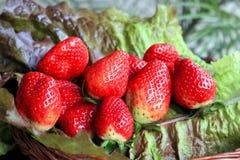 Μια δέσμη των φραουλών στα πράσινα φύλλα μαρουλιού σε ένα ξύλινο καλάθ στοκ φωτογραφίες
