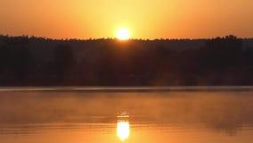 Μια δασική λίμνη με τη μικρή υδρονέφωση, λειαίνει το νερό, επιφάνεια σπινθηρίσματος, στο ηλιοβασίλεμα απόθεμα βίντεο